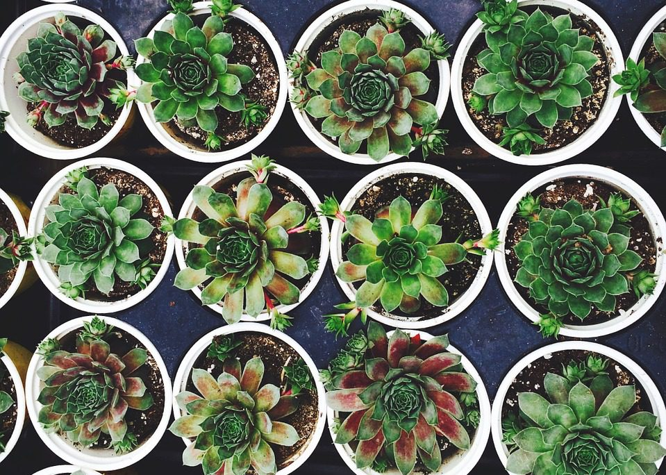 use water wise plants for the drought in SA
